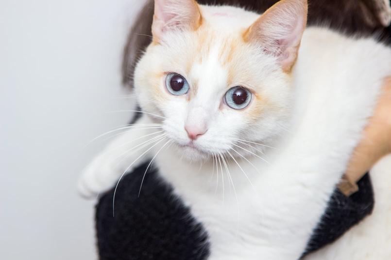 Le Fashionaire Feliz Natal! gato branco ragdoll blogueira catarine martins 0964 PT 805x537
