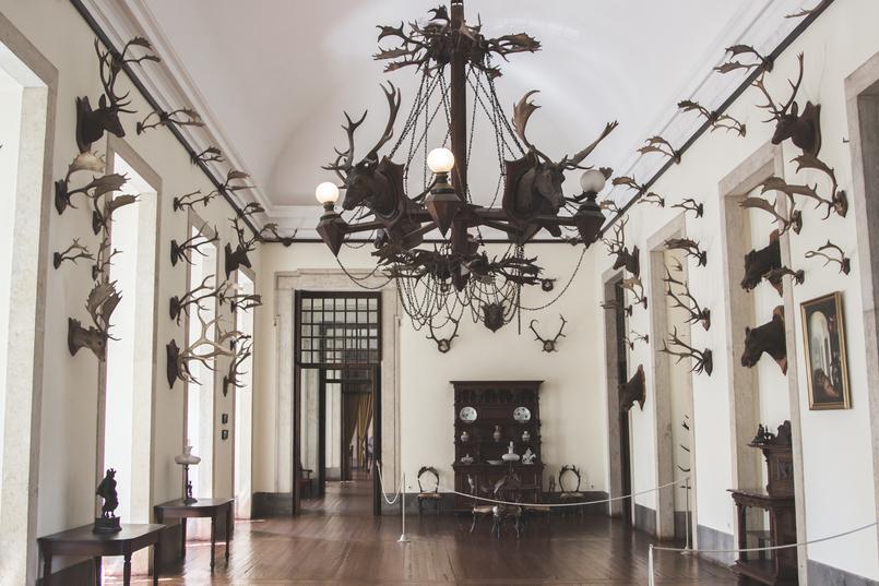 Le Fashionaire Palácio Nacional de Mafra chifres sala caca cadeiras veados castanho salas repletas opulencia palacio nacional mafra 5529 PT 805x537