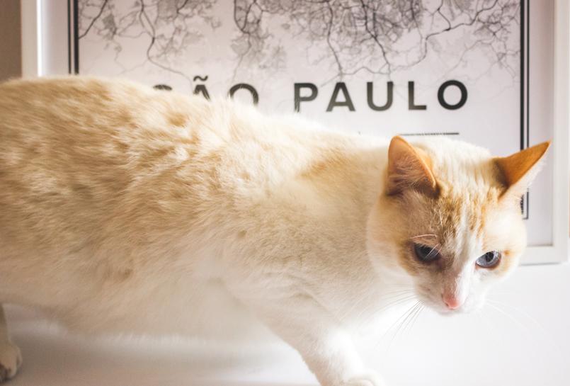 Le Fashionaire Mapiful: os mapas de que toda a gente fala mapa mapiful preto branco sao paulo gato branco kiko 5290 PT 805x545