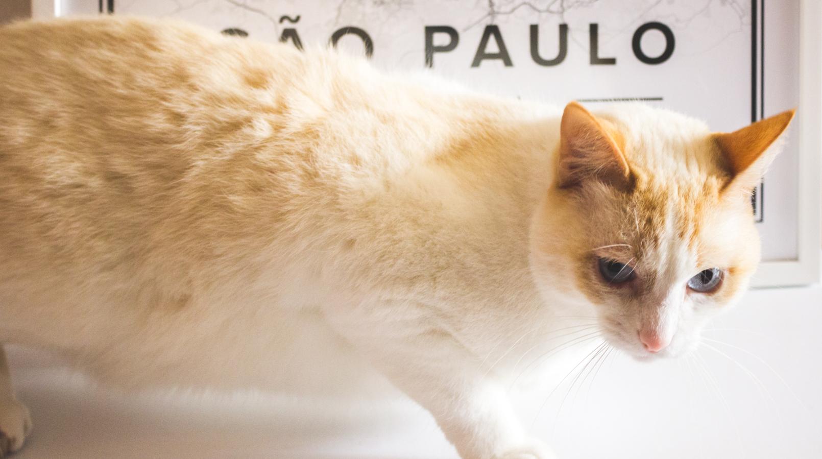 Le Fashionaire Mapiful: os mapas de que toda a gente fala mapa mapiful preto branco sao paulo gato branco kiko 5290F PT